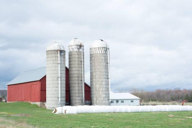 View More: http://alyssabloechlphotography.pass.us/farm-portfolio