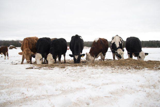 Farm Portfolio-0038.jpg