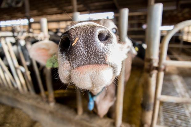 Junion Farm blog-46