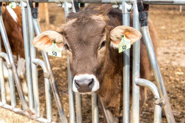 Junion Farm blog-5