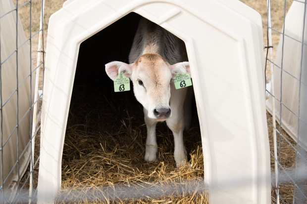 Junion Farm blog-58