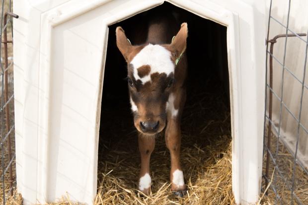 Junion Farm blog-60