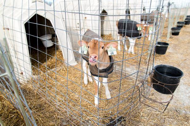 Junion Farm blog-61