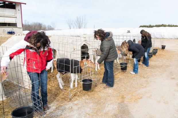 Junion Farm blog-64