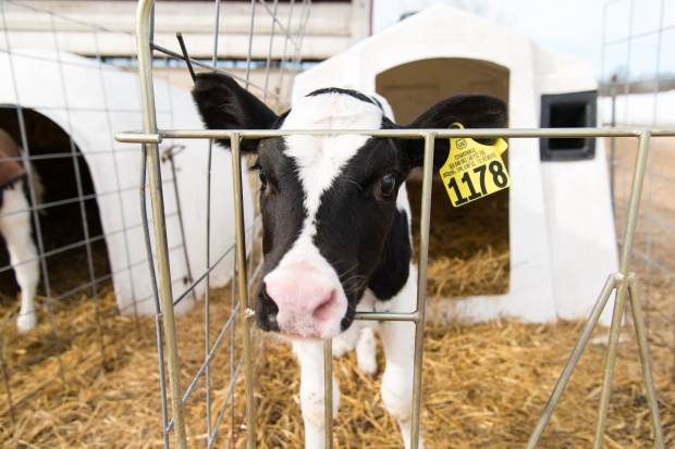 Junion Farm blog-67
