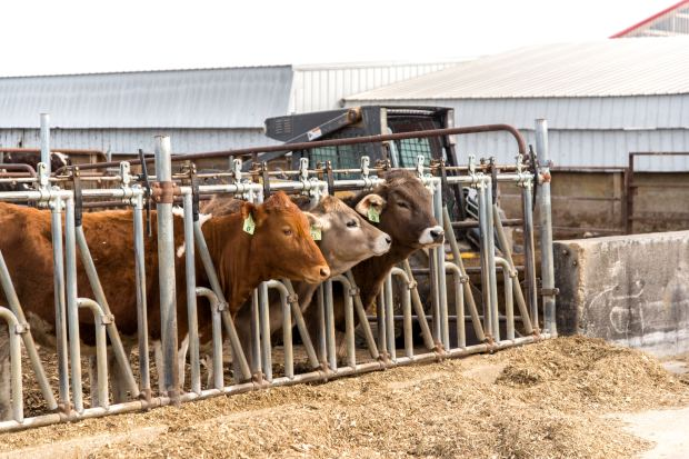 Junion Farm blog-7