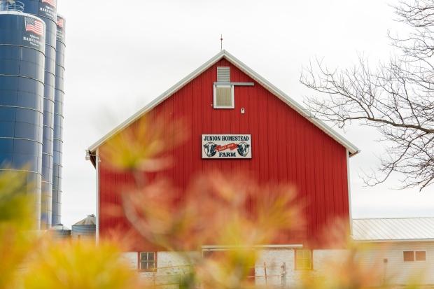 Junion Farm blog-8